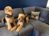 Airedale_pups_and_their_Furbaby_cushion.jpg